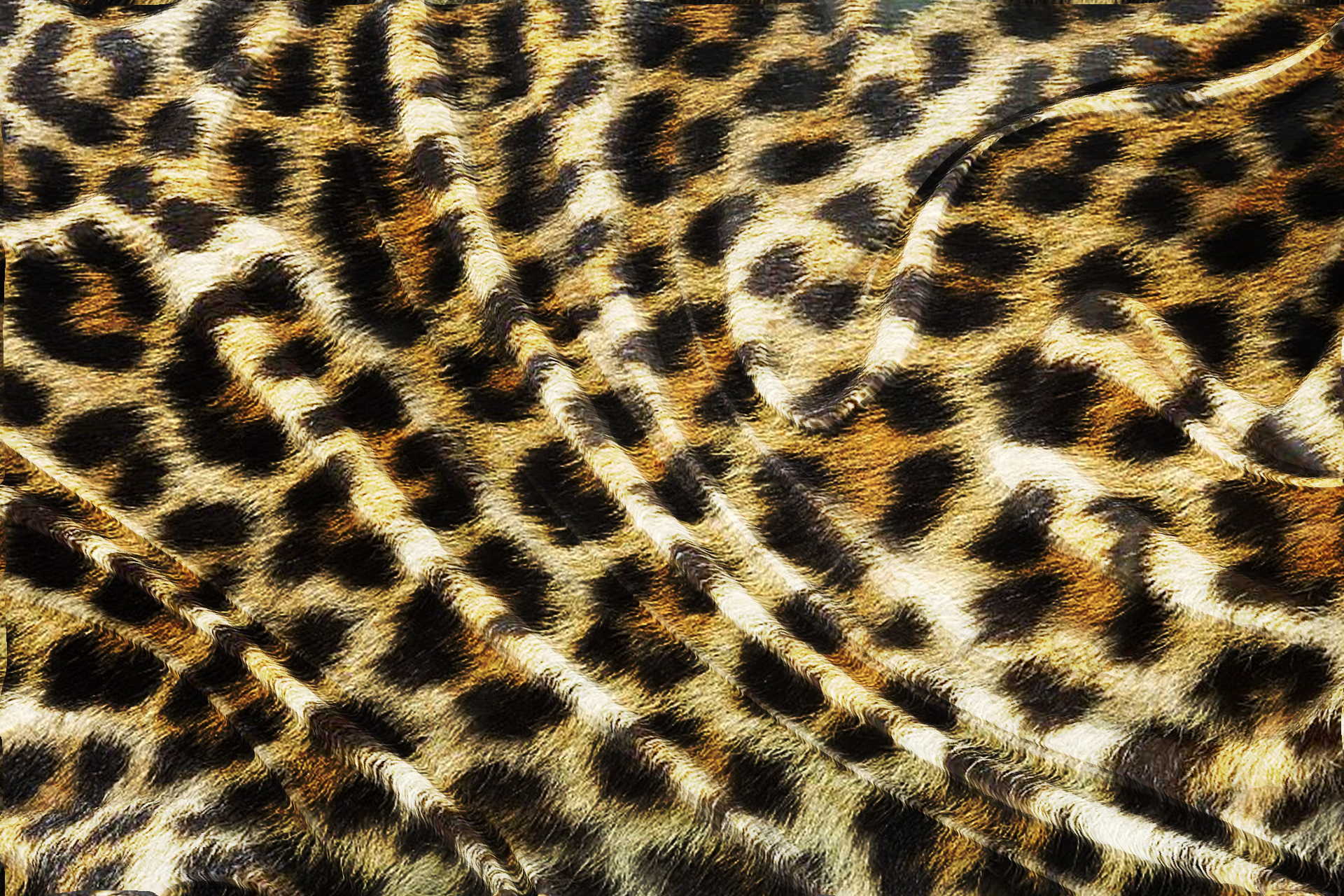 ヒョウの画像 p1_18