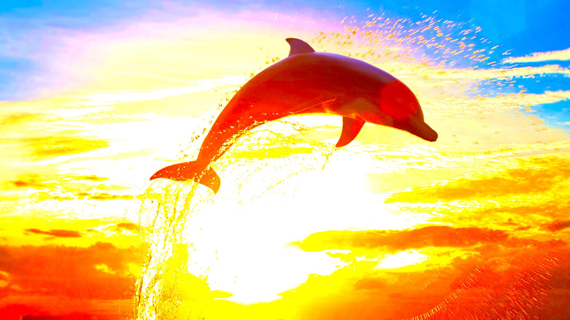 イルカの画像 p1_7