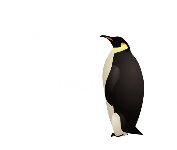 ペンギンの画像 p1_20